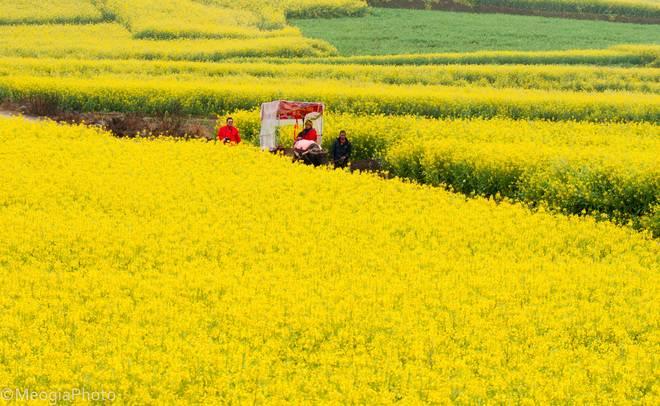 Du lịch La Bình - Vân Nam - Trung Quốc mùa hoa cải